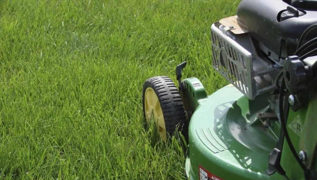 tips to maintain lawn